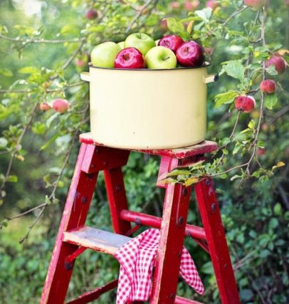 bucket of apples on a ladder in the orchard