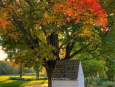 well house by a maple with fall leaves