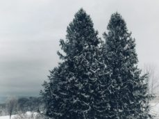 winter views of trees