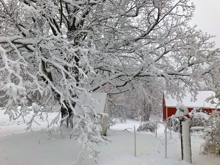 tree and red barn covered in snow