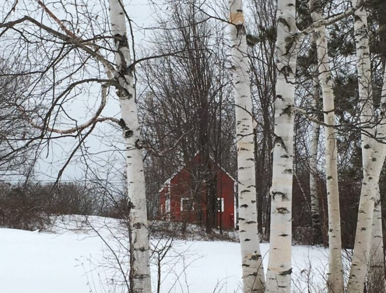 red barn in the snow with birch trees