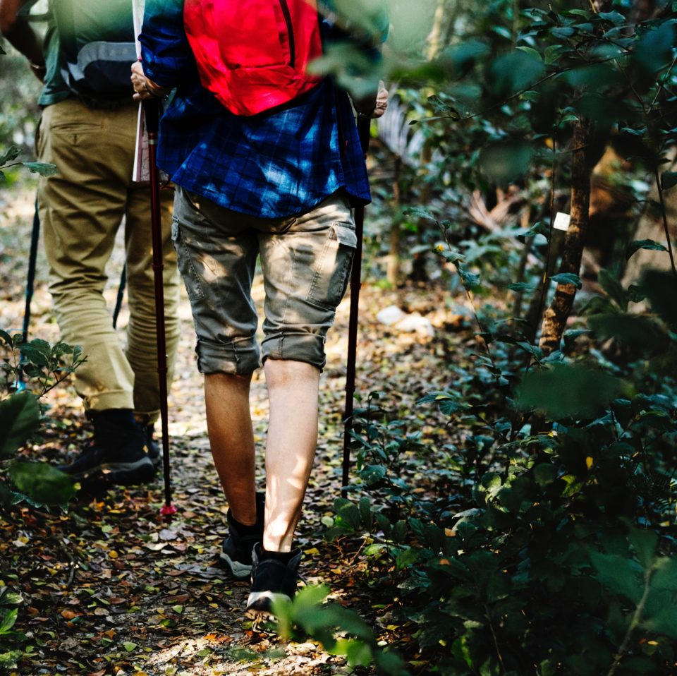 two people hiking through lush woods with backpacks and hiking poles